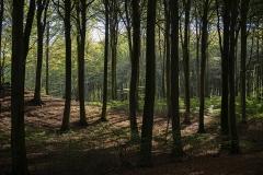 W-forårsskov-på-Møn