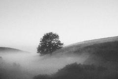 1000-Dollerup-tåge-korn-1