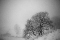 1200-Vinter-træ-1-fix-sh-2