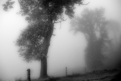 121-Tåge-træ-fix-sh-1