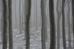 KLinteskoven-vinter-2