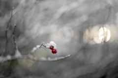 121-bær-DSC_9369-1